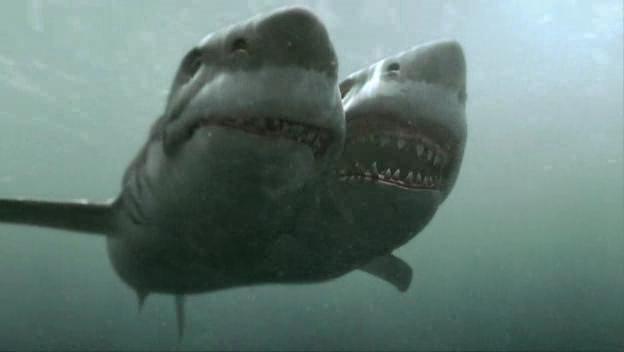 Atak W Nowej Zelandii Film Gallery: Dwugłowy Rekin Atakuje